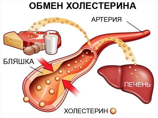недостаток холестерина в крови